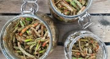 Pędy sosny – przepis na syrop i jego właściwości