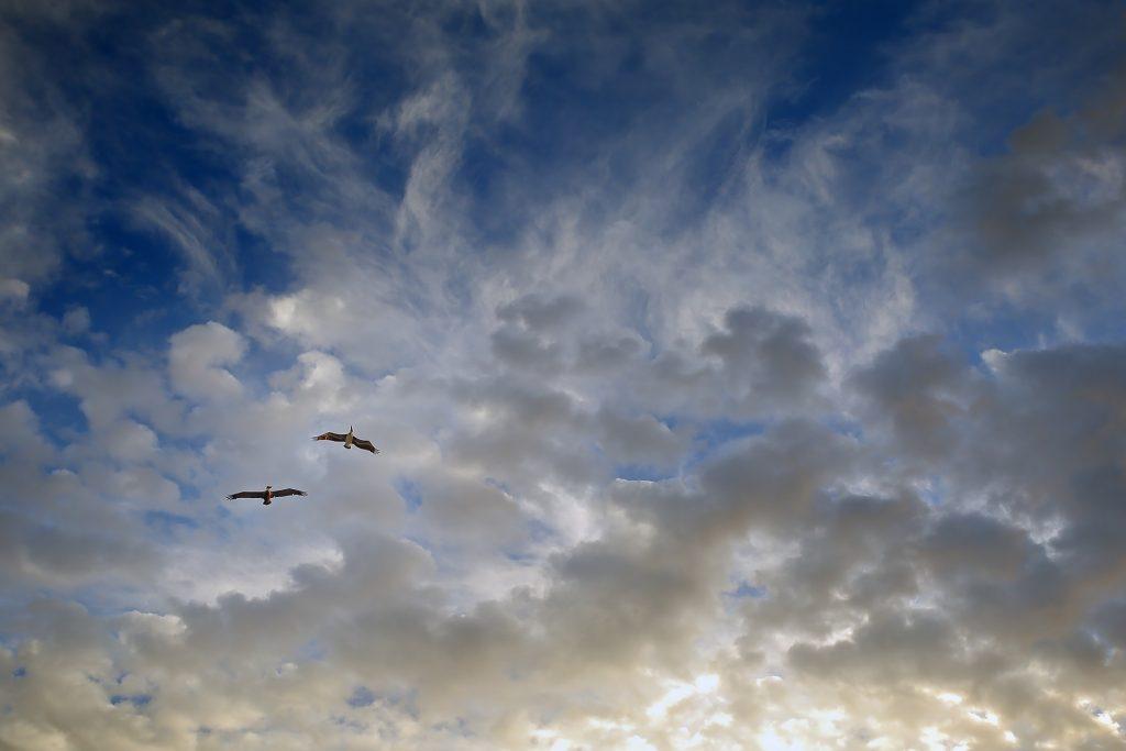 birds-1059307_1920