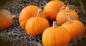 Przyszła jesień – czas poznać lecznicze właściwości dyni. Badania, które Cię zaskoczą