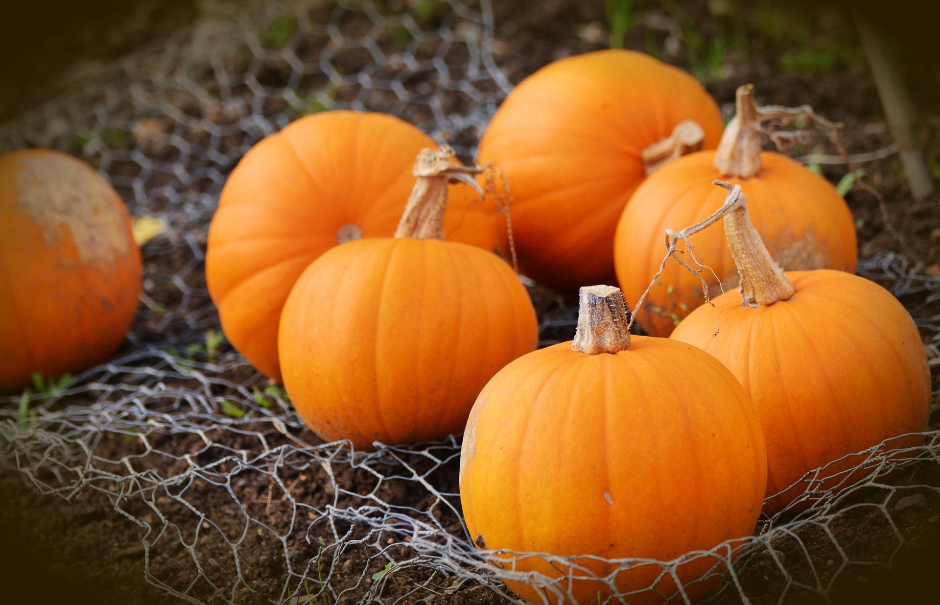 pumpkin-1679827_1920
