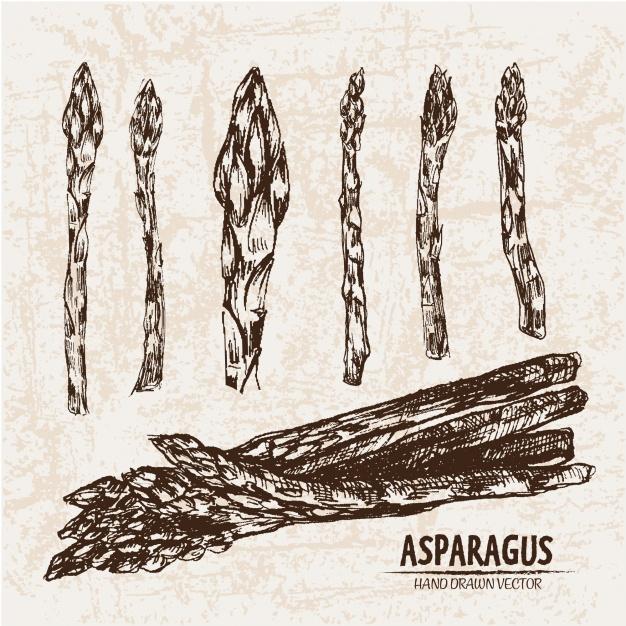 kolekcja-szparagow-wyciągnąć-rękę_1268-1110