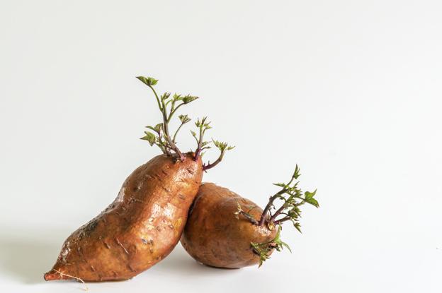 słodkie-ziemniaki-z-uprawy-roślin_1136-282